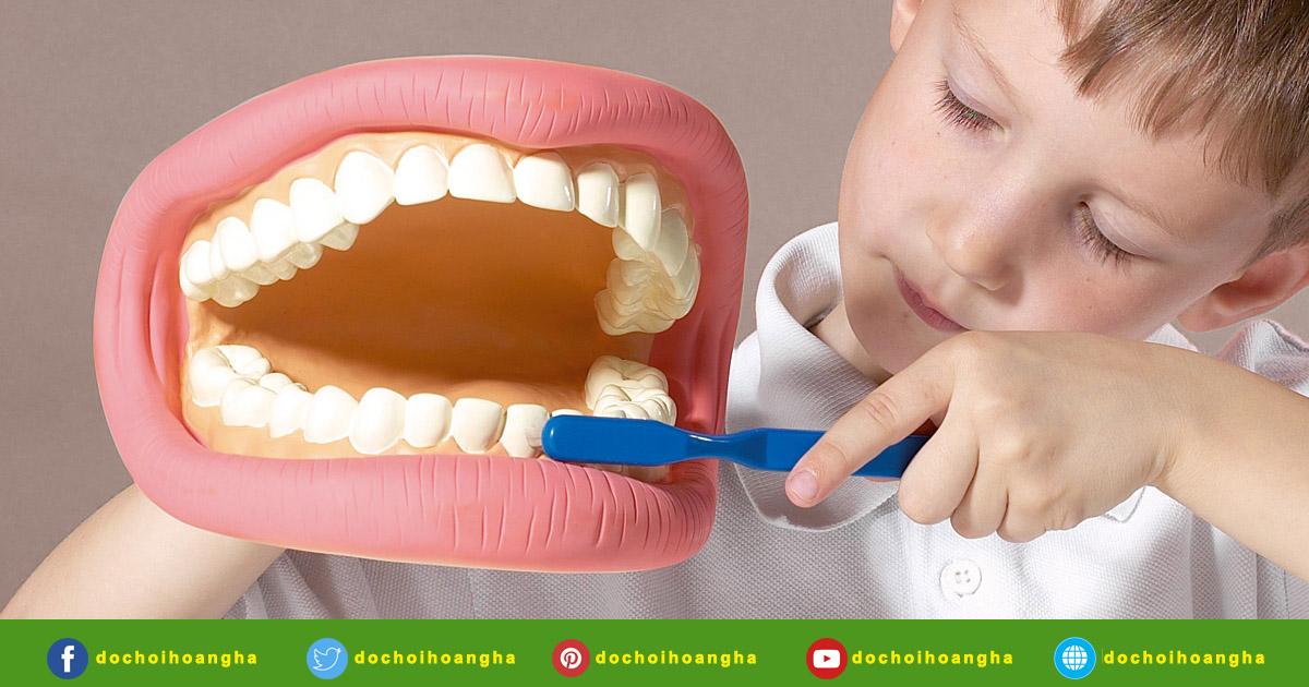 Mô hình hàm răng giúp trẻ tìm hiểu về cấu tạo của răng hỗ trợ cho quá trình học cách vệ sinh răng miệng đúng cách.