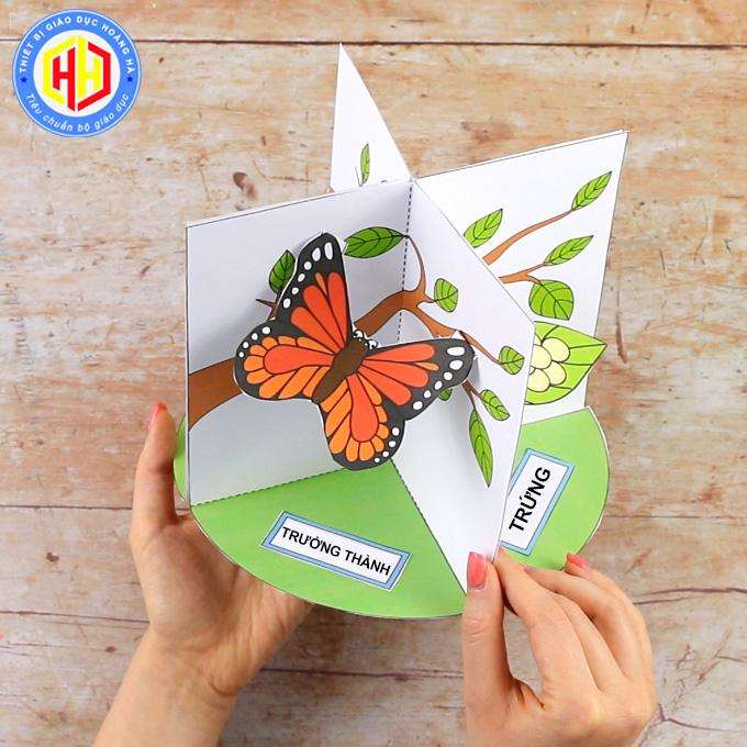 Trưởng thành: một con bướm với đôi cánh rộng sặc sỡ chui ra khỏi cái kén