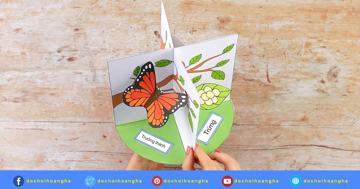 hình ảnh vòng đời phát triển của bướm
