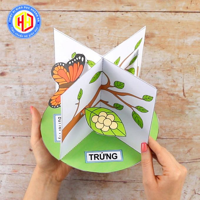 trứng thường được bướm mẹ đẻ trên lá